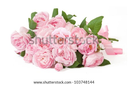 Pink rose bunch isolated on white background