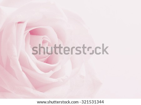 Pink rose close-up can use as wedding background. Soft blur focus. In sepia vintage pastel toned - stock photo
