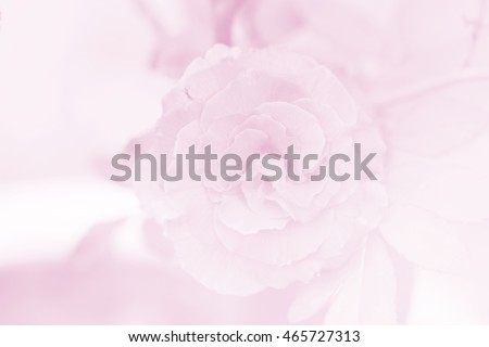 pink rose flower in vintage color style for background