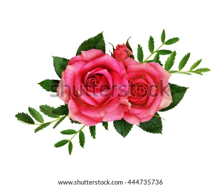 Pink Rose Flowers Bouquet Isolated On White