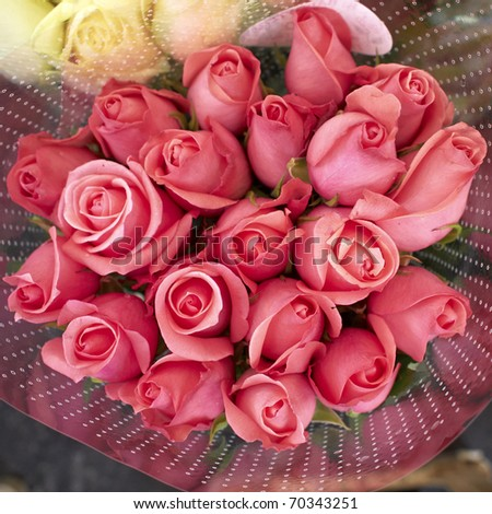 pink rose flowers bouquet, natural background - stock photo