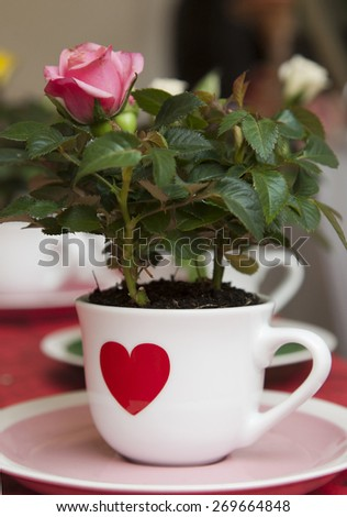 pink rose in little cup with red heart on a table - stock photo