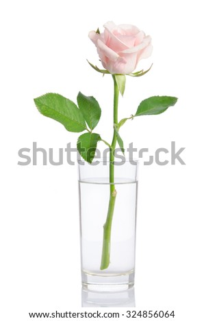 pink rose in vase isolated on white - stock photo
