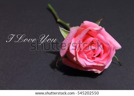Pink Rose isolated on a black background with the words I Love You
