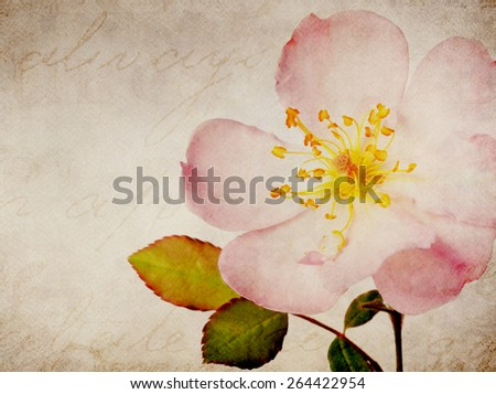 Pink Rose Marble Stone Natural Background Collage - stock photo