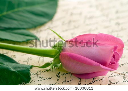 pink rose on old handwriting
