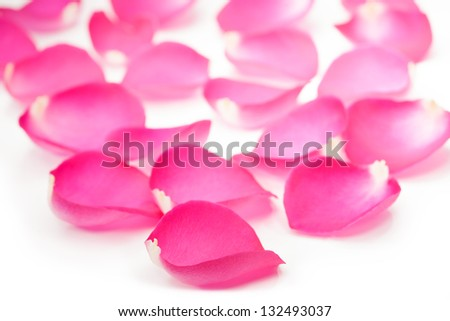 Pink rose petal isolated on white background