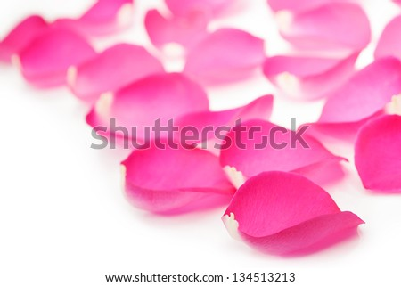 Pink rose petal isolated on white background with sample text