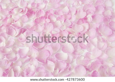 Pink rose petals closeup background - stock photo