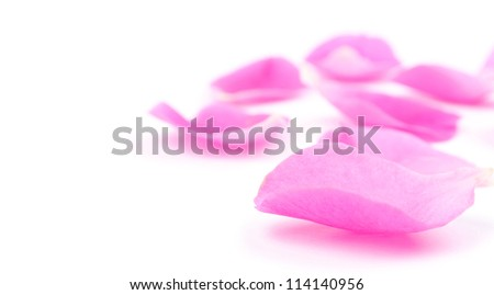 Pink rose petals isolated on white and copy-space