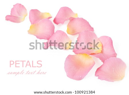 Pink rose petals isolated on white background with sample text - stock photo