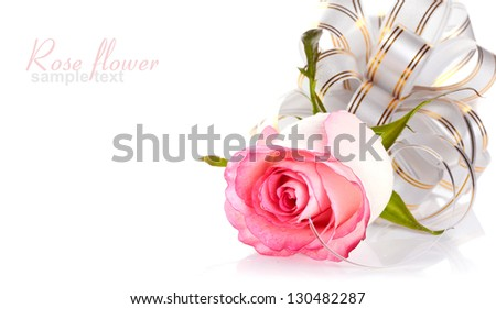 Pink rose. Rose on a white background. Pink flower. Rose with a bow. Flower as a gift.
