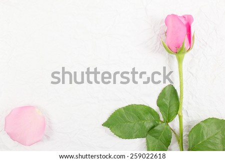Pink rose with petals on a wrinkled paper background - stock photo