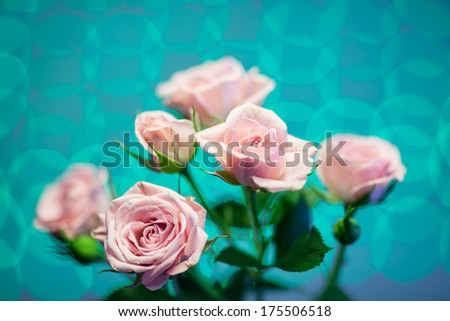 Pink rose with turquoise circle blurry background - stock photo