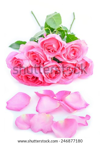 Pink roses and petals on white