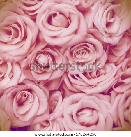 Pink roses as a background for design - stock photo