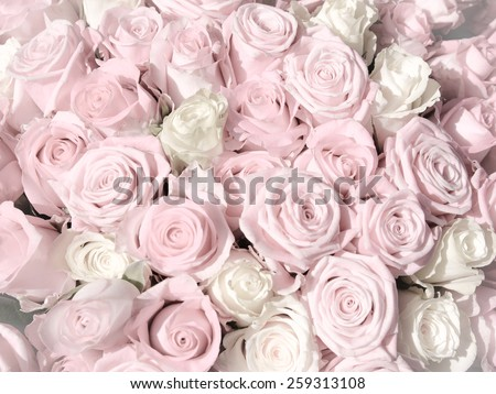 Pink roses background delicate and romantic - stock photo