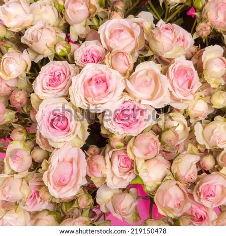 pink roses background of my floral backgrounds series - stock photo