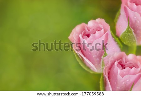 Pink roses border on green bokeh background with free space for text