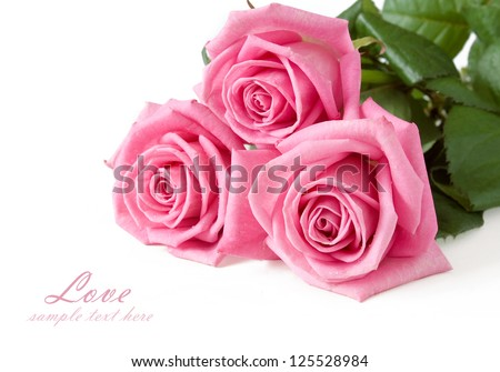 Pink roses bunch isolated on white background with sample text - stock photo