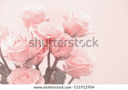 Pink roses close-up