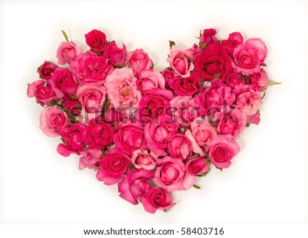 Pink roses Heart shape.on white background. - stock photo