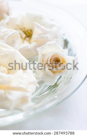 pink roses in a bowl with water