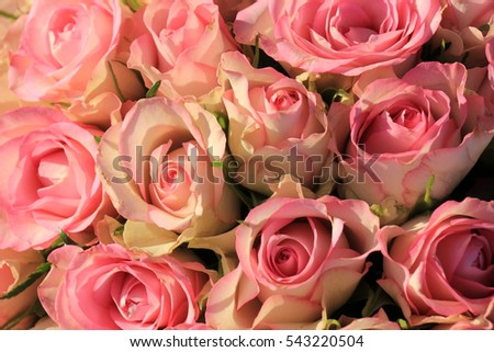 Pink roses in an all pink wedding arrangement
