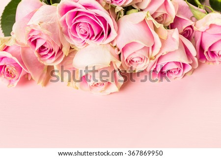 Pink roses on pink background. - stock photo