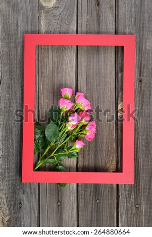 Pink roses on wooden vintage table in red frame for photos - stock photo