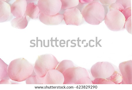 Pink roses petals background