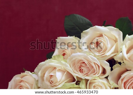Pink Roses, selective focus, macro, dark red background