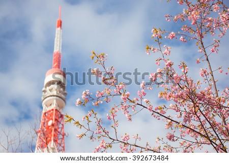 Pink Sakura, cherry blossom,foreground and Tokyo tower is background - stock photo