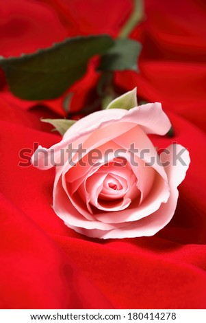 pink single rose on red background  - stock photo