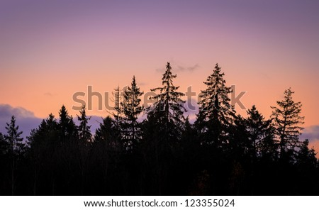 pink sky over black firs on sunset - stock photo