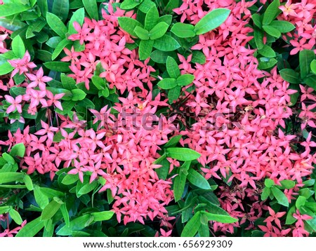 Pink spike flower stock photo safe to use 656929309 shutterstock pink spike flower mightylinksfo