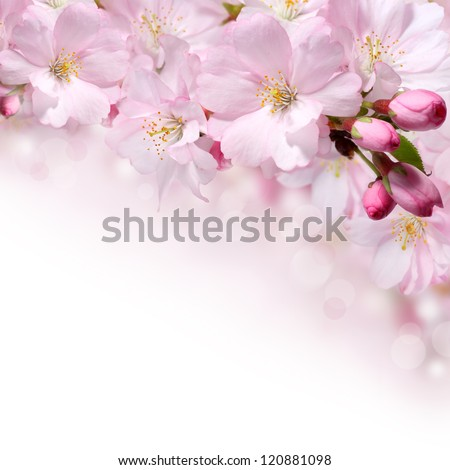 Pink spring flowers border or background - stock photo