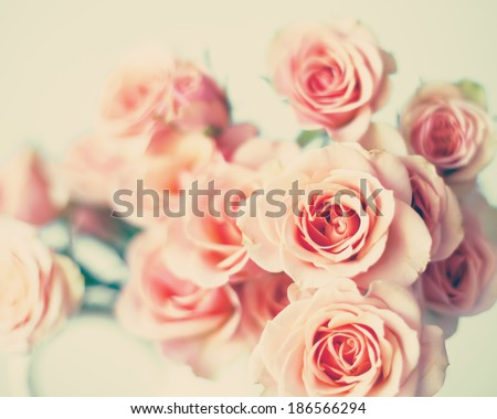Pink Spring Roses - stock photo