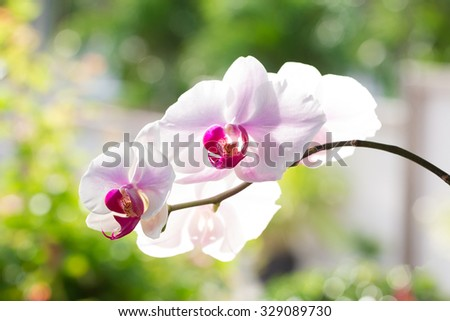 Pink streaked orchid flower in nature green background