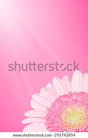 Pink summer flower background