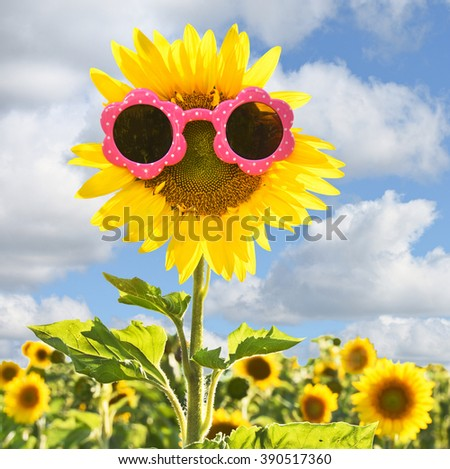 pink sunglasses on yellow sunflower in field with sky background - stock photo