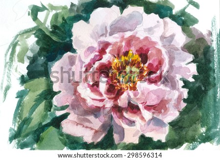 pink  tree peony, watercolor sketch from nature - stock photo