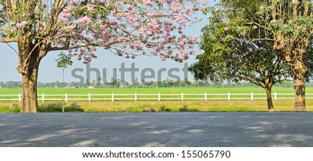 Pink trumpet blossom in front of green field - stock photo