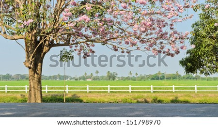 Pink trumpet blossom infront of green field - stock photo