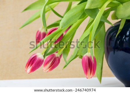 pink tulip bouquet in a royal blue vase - stock photo