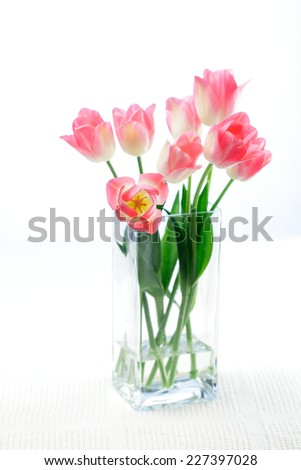 Pink tulip /  Dreamland variety in a glass vase isolated on white background