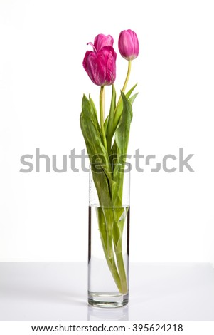 pink  tulip flowers in glass vase