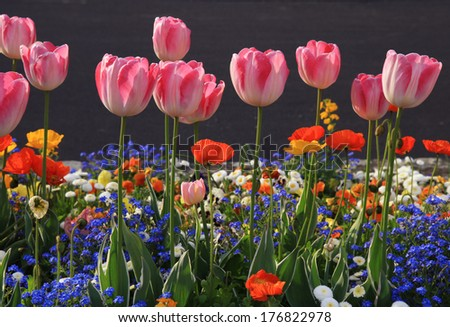 pink tulips and multicolored garden flowers, selective focus, horizontal image - stock photo