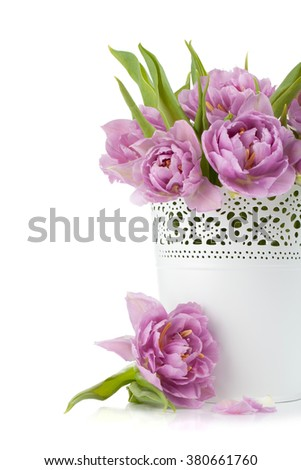 Pink tulips and petals. Isolated on white background - stock photo