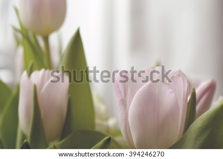 Pink tulips in soft light, vintage